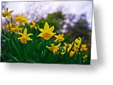 Daffodils Sky Greeting Card