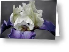 Faded Iris 6622 H_9 Greeting Card