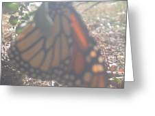 Faded Monarch  Greeting Card