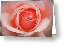 Faded - Perfect Pink Rose Greeting Card