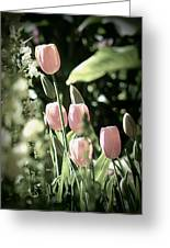 Faded Tulips Greeting Card