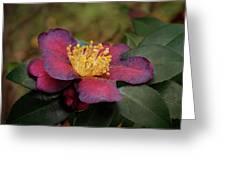 Fading Camellia Greeting Card