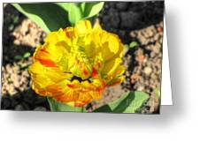 Fading Flower Greeting Card