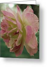 Fading Rose In Sepia Greeting Card