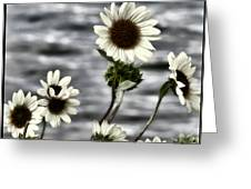 Fading Sunflowers Greeting Card