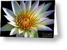 Fairest Lily Greeting Card