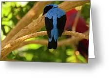 Fairy Bluebird Male Digital Oil  Greeting Card