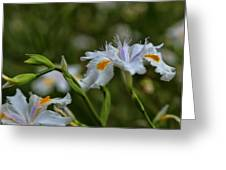 Fairy Iris 2 Greeting Card