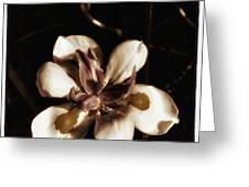 Fairy Iris. A Butterfly Landed On My Greeting Card
