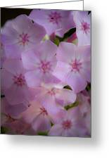Fairy Tale Phlox Greeting Card