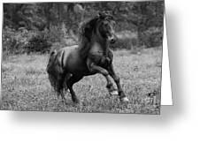 Fairy Tale Stallion Leaps Greeting Card
