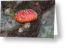 Fairy Toadstool  Greeting Card