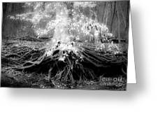 Fairy Tree Greeting Card
