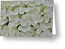 Fairy White Flowers Greeting Card