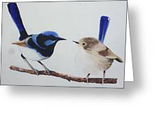 Fairy Wrens - I Love You Too  Greeting Card