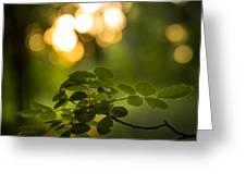 Fairyland Trees Greeting Card