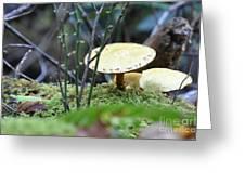 Fairy's Umbrella Greeting Card