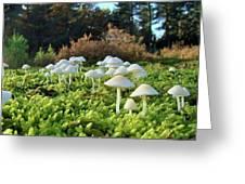Fairytail Mushrooms Greeting Card