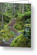 Fairytale Trail Greeting Card