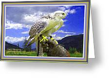 Falcon Being Trained H A With Decorative Ornate Printed Frame. Greeting Card