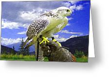 Falcon Being Trained H B Greeting Card