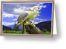 Falcon Being Trained H B With Decorative Ornate Printed Frame. Greeting Card