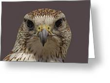 Falcon Eye II Greeting Card