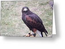 Falcon IIi Greeting Card