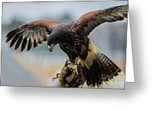 Falcon On Gloved Hand 5251 Greeting Card
