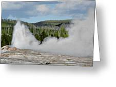 Falcon Over Old Faithful - Geyser Yellowstone National Park Wy Usa Greeting Card