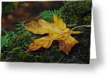 Fall Alone Greeting Card