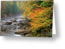 Fall Along The Cranberry River Greeting Card by Thomas R Fletcher