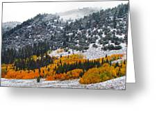 Fall And Winter Collide  Greeting Card