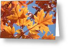 Fall Art Orange Autumn Leaves Blue Sky Baslee Troutman Greeting Card