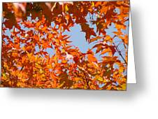 Fall Art Prints Orange Autumn Leaves Baslee Troutman Greeting Card