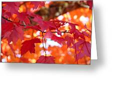 Fall Art Red Autumn Leaves Orange Fall Trees Baslee Troutman Greeting Card