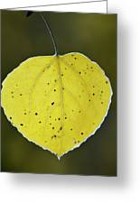Fall Aspen Leaf Greeting Card