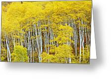 Fall Aspen Meadow Greeting Card