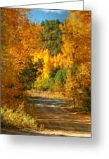 Fall Aspen Trail Greeting Card