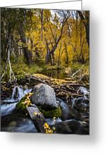 Fall At Mcgee Creek Greeting Card