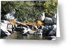 Fall At The Creek Greeting Card