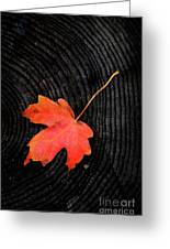 Fall Autumn Leaf On Old Weathered Wood Stump From A Tree Greeting Card