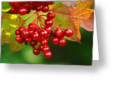 Fall Berries 2 Greeting Card