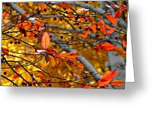 Fall Berries II Greeting Card