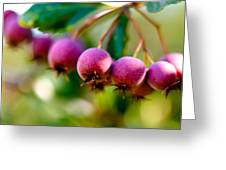 Fall Berries Greeting Card