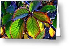 Fall Blackberry Greeting Card