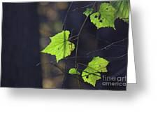 Fall Bokeh Greeting Card