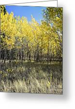 Fall Breeze On The Plains Greeting Card