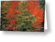 Fall Brilliance Greeting Card