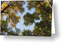 Fall Canopy In Virginia Greeting Card